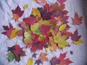 Autumn Leaves, John Silva, The Fix-It Professionals