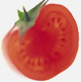 Tomato, John Silva, The Fix-It Professionals